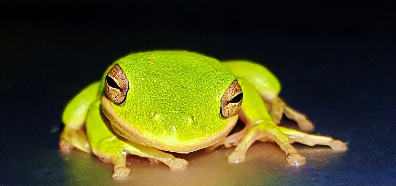 מה צריך ללמוד מאירוע הצפרדע של כרמל יבולים?